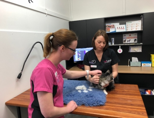 Brisbane Cooperative Desexing Program to prevent unwanted cats