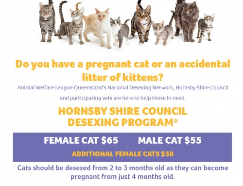 Hornsby City Council (NSW) cat desexing program